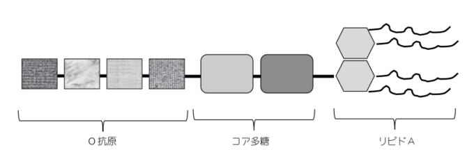 エンドトキシンの構造