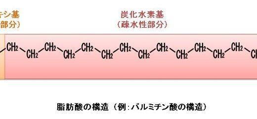 脂肪酸の構造と種類についてわかりやすく解説します
