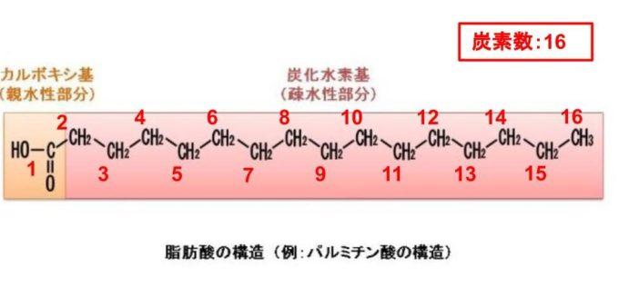 脂肪酸の構造(長鎖脂肪酸)