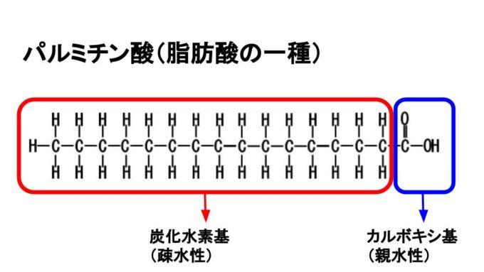 脂肪酸の構造