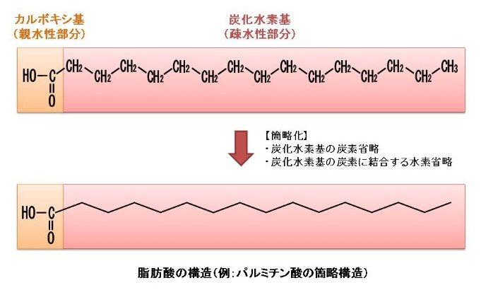 脂肪酸の構造(簡易版)
