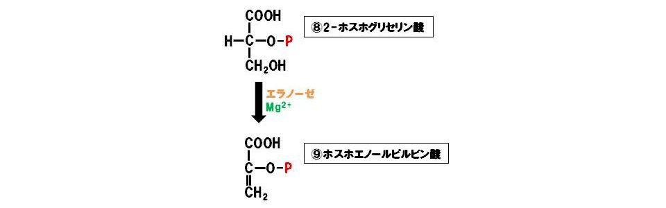 エノラーゼ(除去付加酵素)