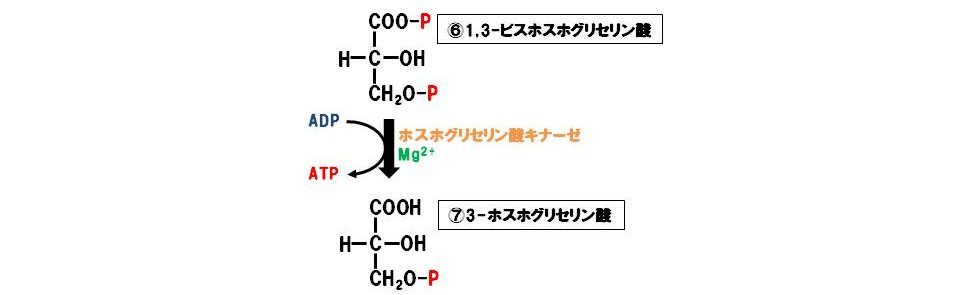 ホスホグリセリン酸キナーゼ(転移酵素)