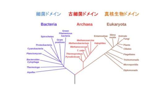 三ドメイン説による生物の分類とは【古細菌・真正細菌・真核細胞】