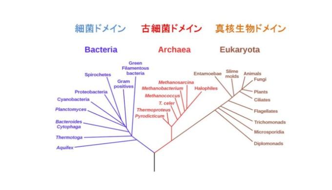細菌ドメイン、古細菌ドメイン、真核生物ドメイン2