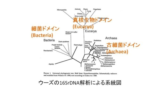 細菌ドメインと真核生物ドメインと古細菌ドメイン