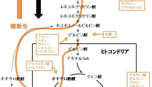 糖新生の反応経路の流れを図を多用して解説します