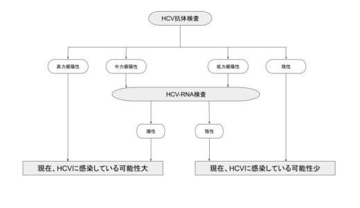 HCV-RNA検査とは?【C型肝炎やHCV抗体検査についても解説】