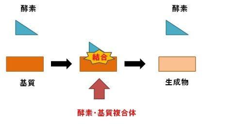 酵素反応の基本