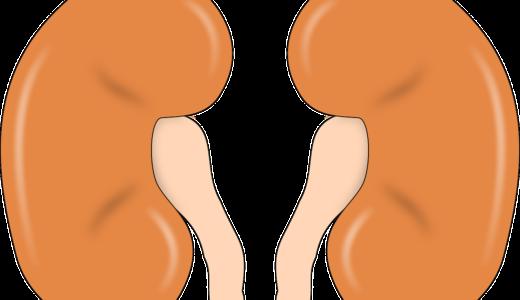 腎臓から出るエリスロポエチンとはなに?簡単にわかりやすく解説してみた