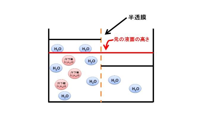 半透膜を介した水の浸透による液面の上昇
