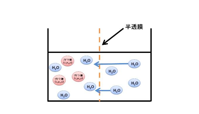 半透膜を介した水の浸透