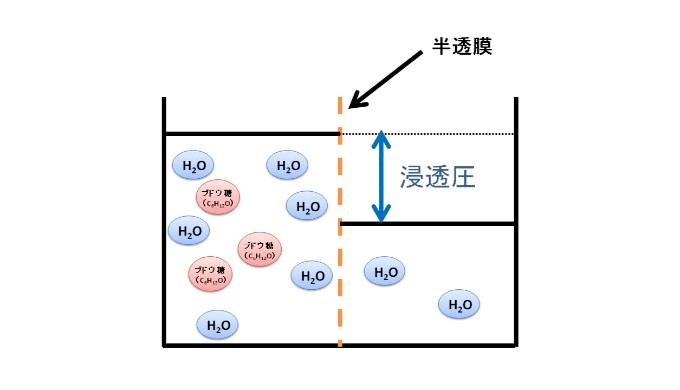 水の浸透による液面の差が生じ、浸透圧が発生