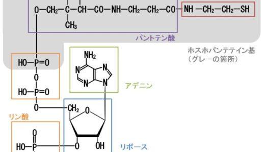 【補酵素A】CoAとは?その構造や働きについてわかりやすく解説します
