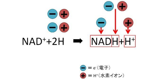 NADと電子、水素の反応式