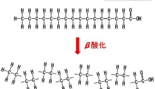 【ベータ酸化】β酸化とは何?簡単にわかりやすく解説してみた