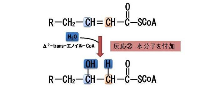 β酸化の除去付加反応