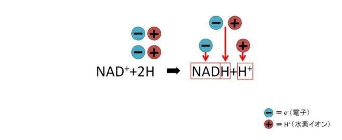 NADの電子と水素イオンのやり取り