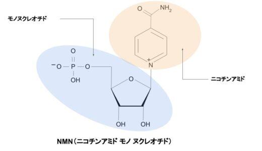 NMNとはなに?わかりやすく効果を解説します。