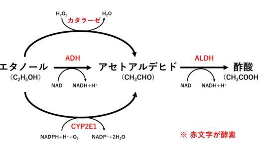 アルデヒド脱水素酵素(ALDH)とはなに?わかりやすく解説してみました