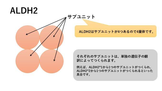 ALDH2の4量体としての構造